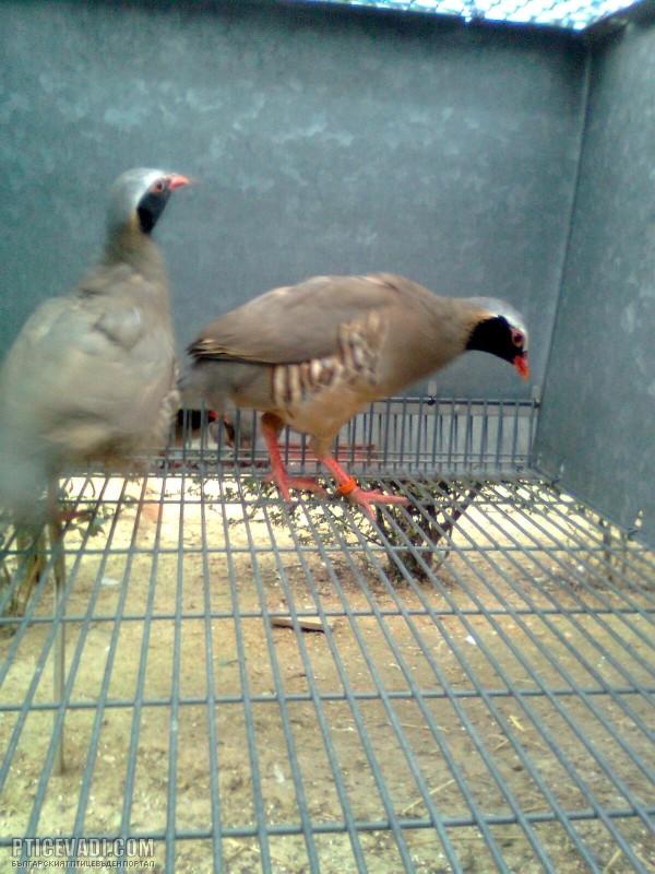 Снимка на птица