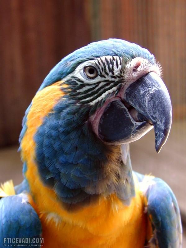 Photo of a bird